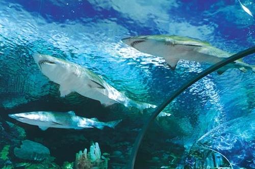 Hotels In Gatlinburg Near Ripleys Aquarium
